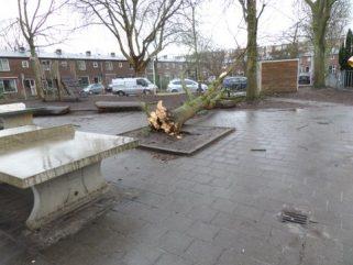 omgevallen boom op schoolplein
